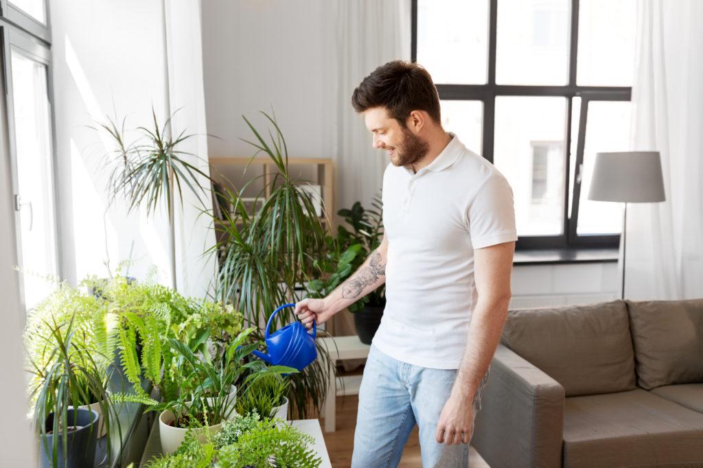 Houseplants, home ventilation